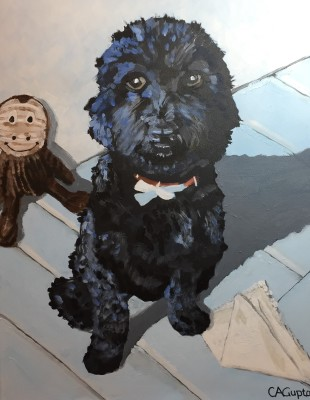 Portrait of cockapoo Maxwell with toys