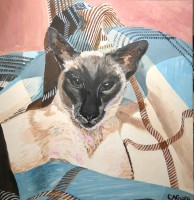 Portrait of Joey, Siamese cat on plaid rug