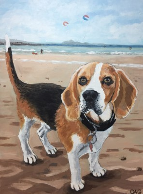 Portrait of beagle Reilly at Longniddry beach