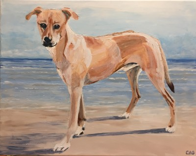 Portrait of Wadi, beach dog from Antigua who moved to Denmark