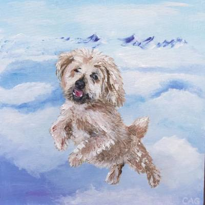 Portrait of small dog flying above clouds