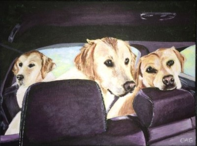 Three dogs in back of car wanting to go walkies